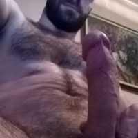 Turkish Delight bear hung hairy