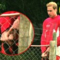 Prince-William-Royal-Penis-Pic