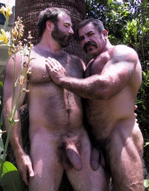 mature-hung-bears